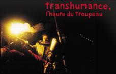 visuel Transhumance, l'heure du troupeau